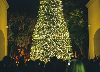 people watching lighted green Christmas tree at nighttime
