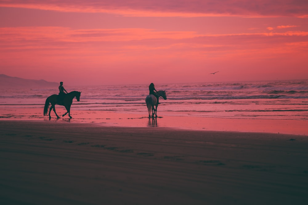 two person riding horses on seashore
