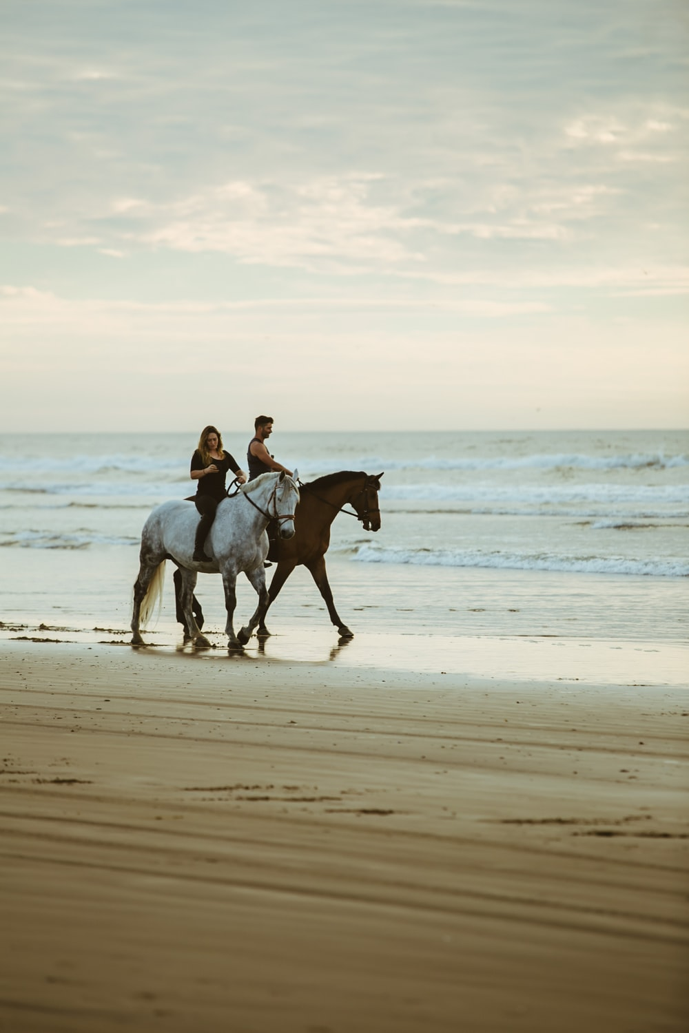 Horse Beach Pictures Free