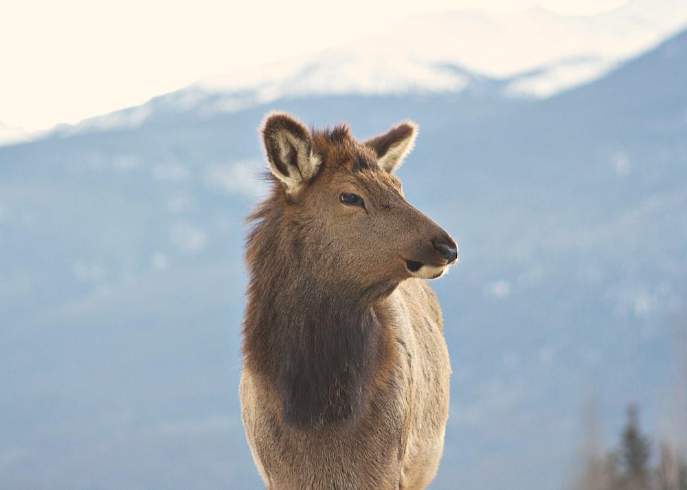 brown fur animal standing on mountain