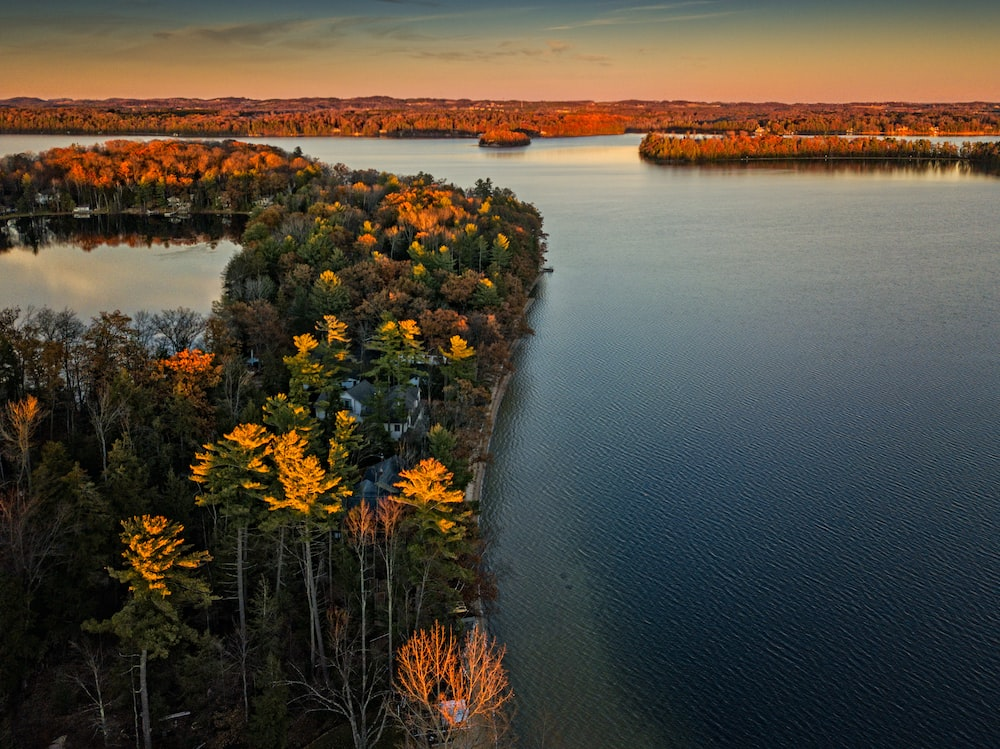 aerial photography of trees near body of water