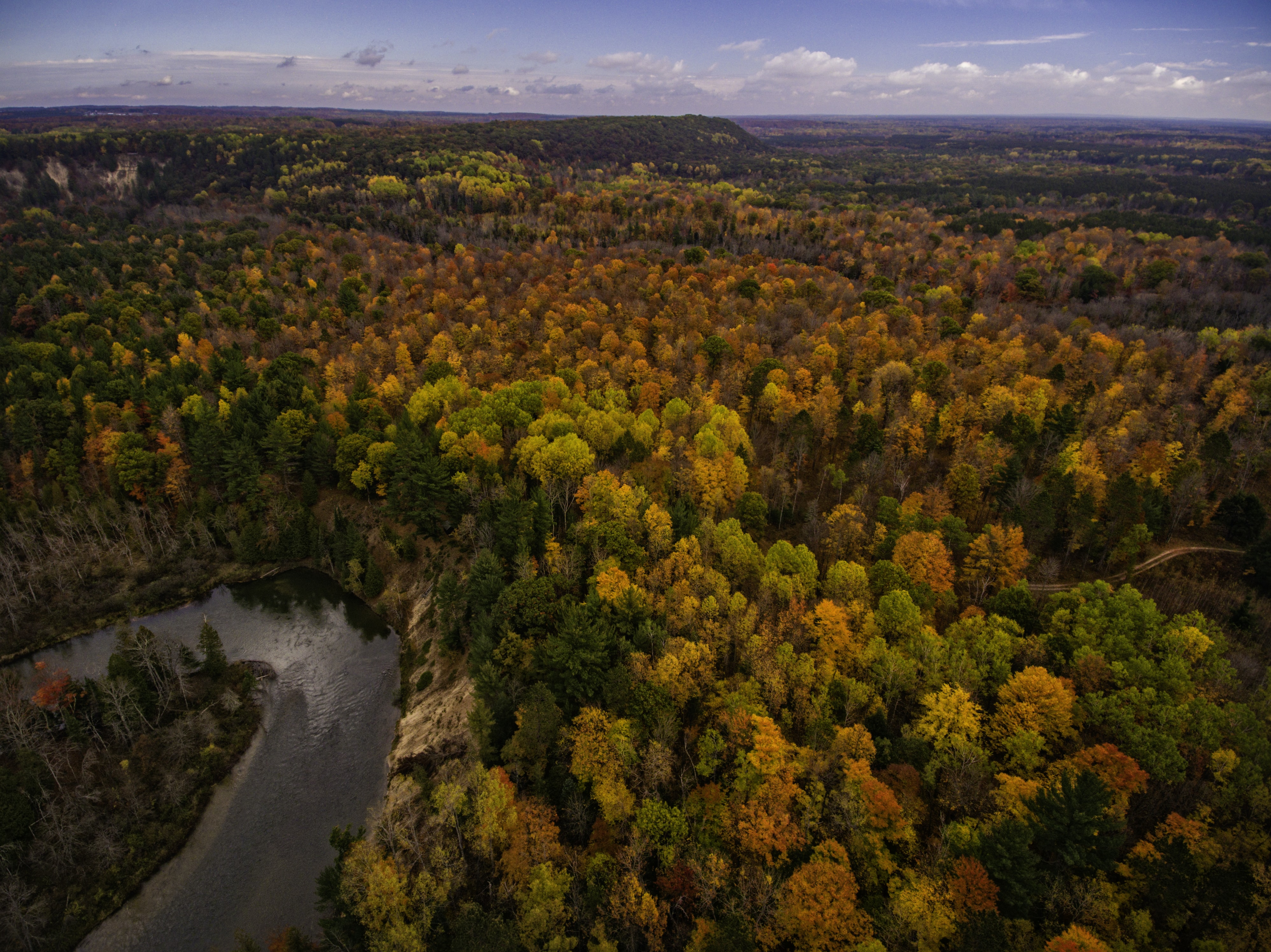 aerial photography of green and brown trees