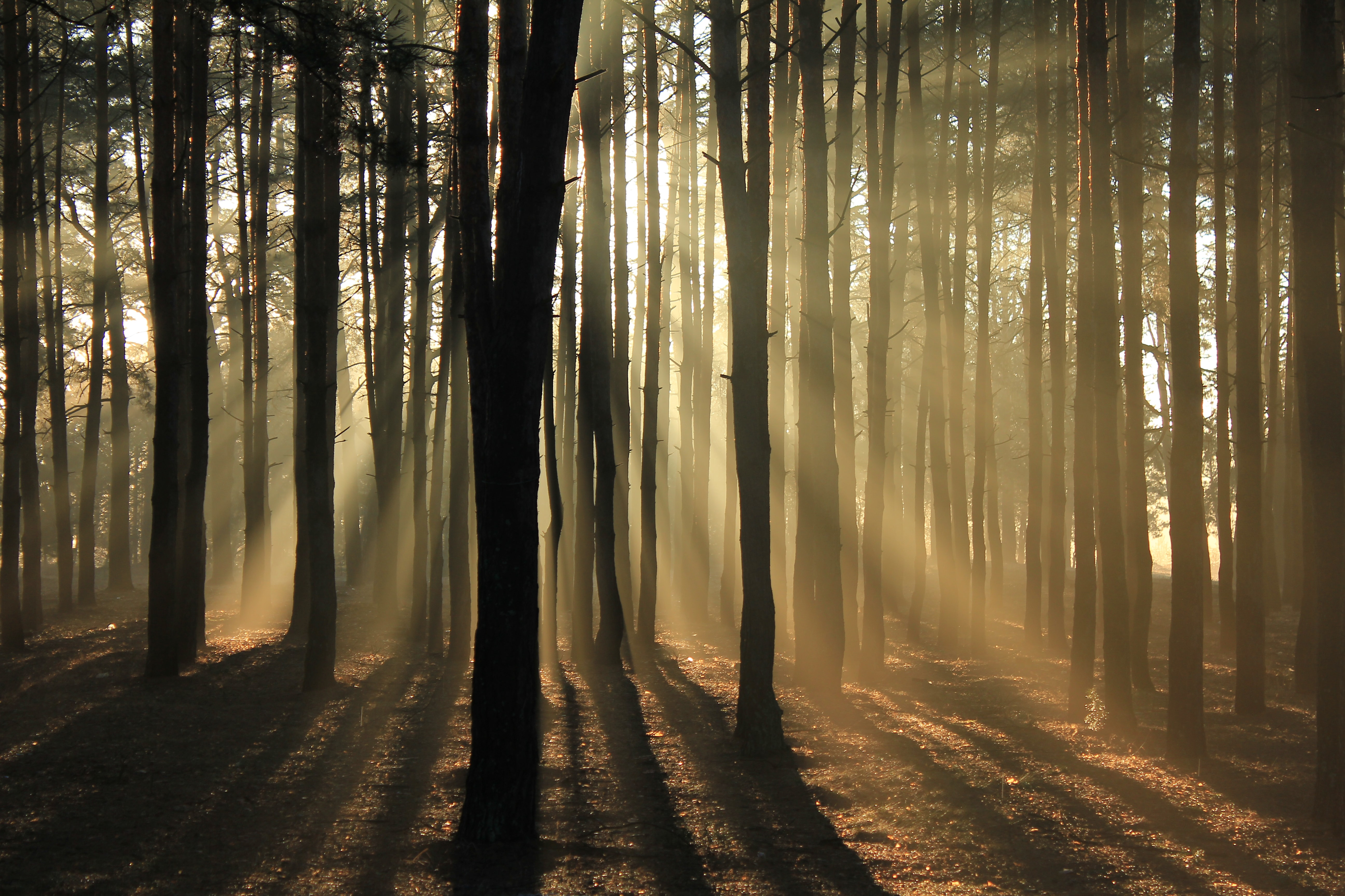 silhouette of trees surrounded with fogs