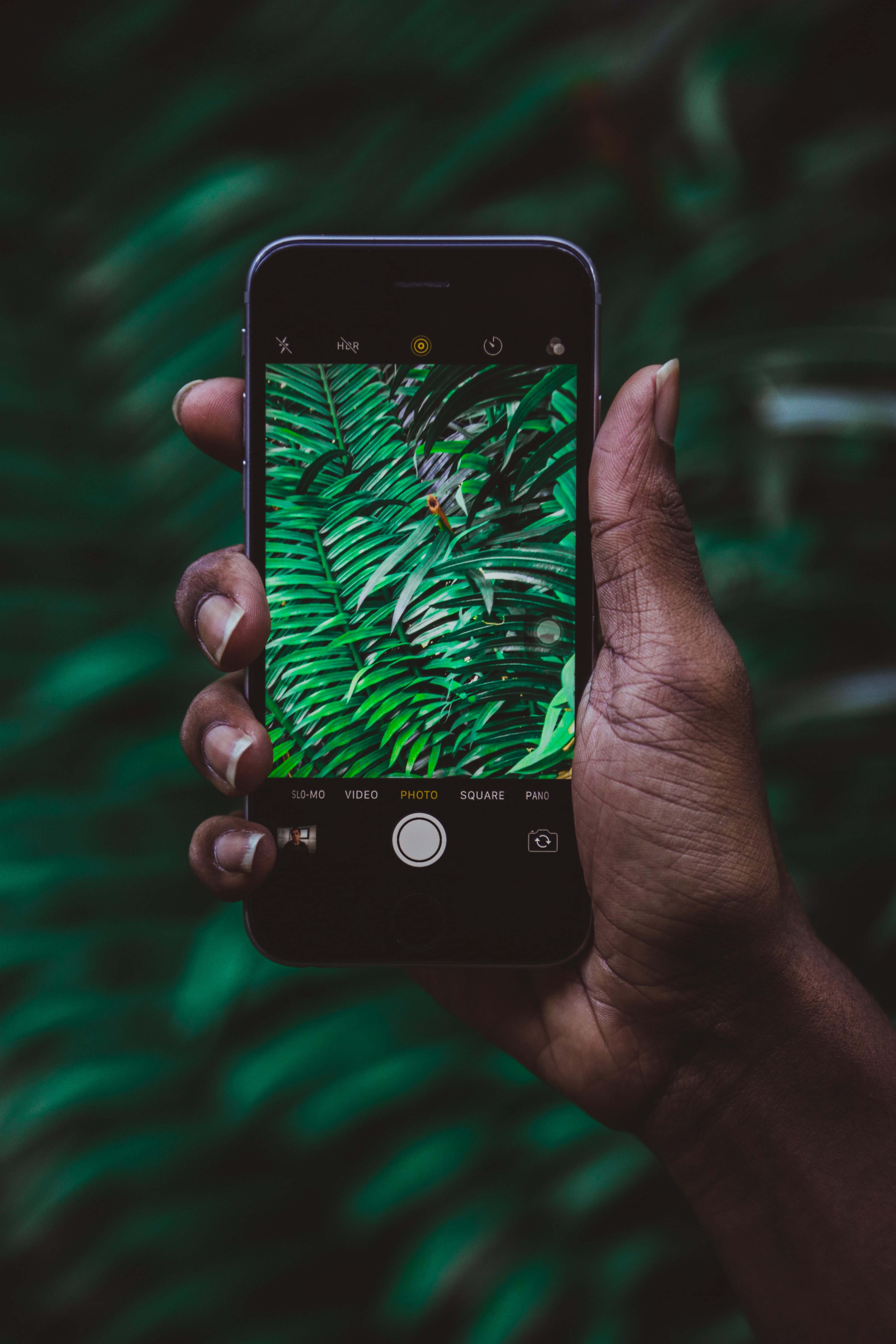 person capturing green leaves using iPhone