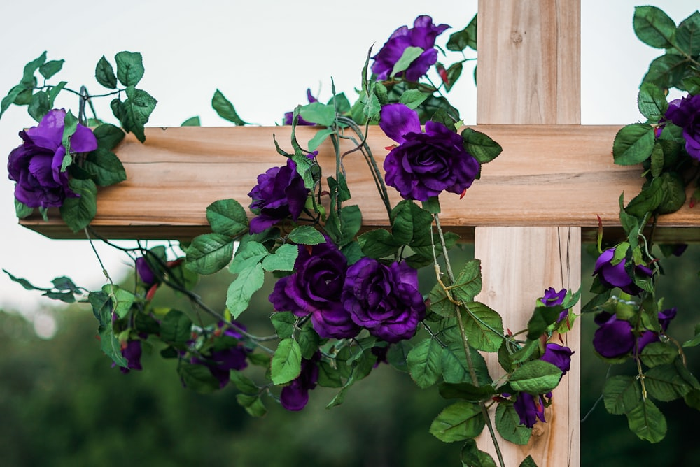 close up photography of purple roses hanging on brown wooden cross