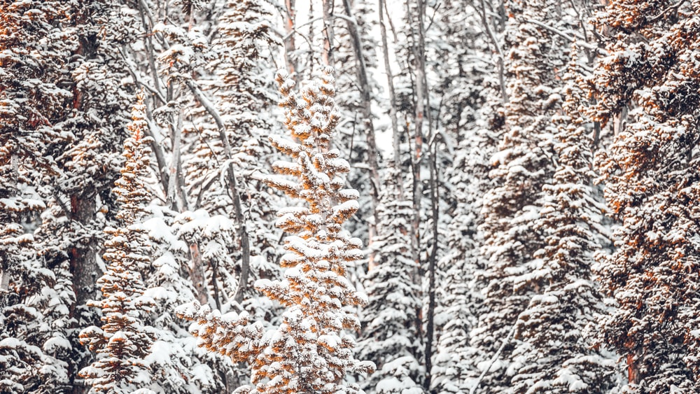 snow covered trees at daytime