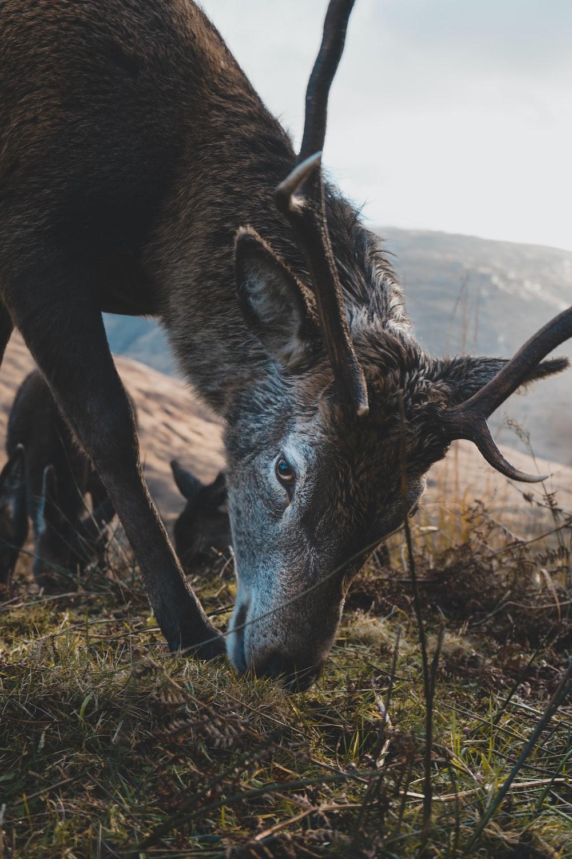 closeup photography of brown deer