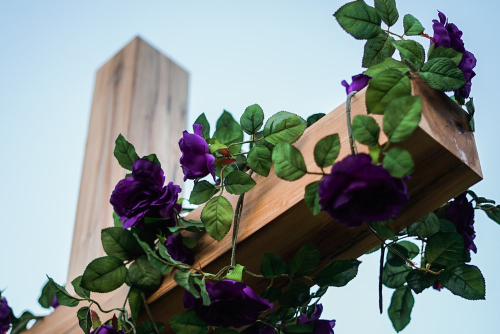 purple flowers on brown wooden fence