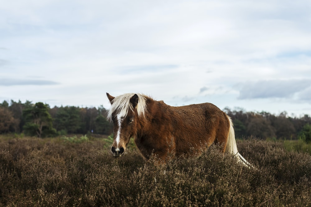 brown and white horse at grass field with text overlay