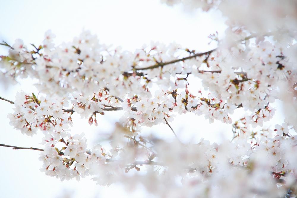 closeup photo of a white petaled flowers