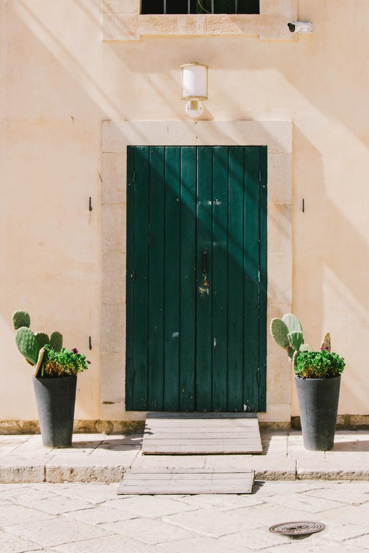 green cactus plant near green door