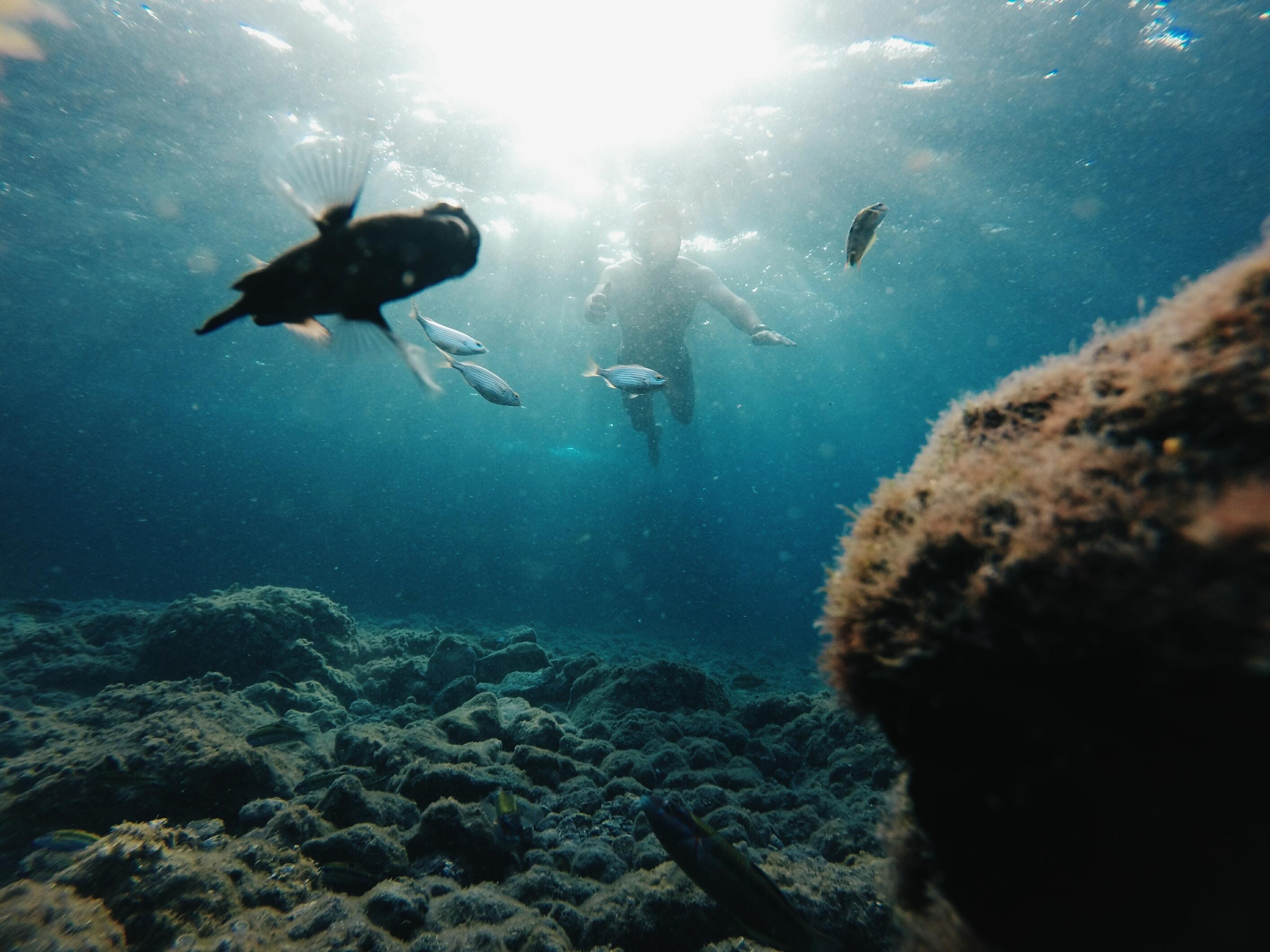 man diving undewater