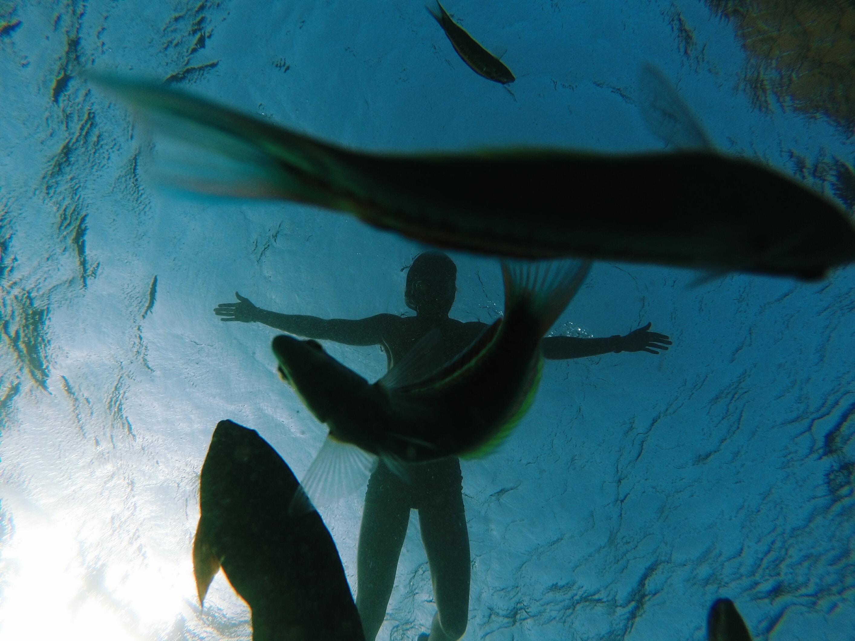 underwater photo of shoal of fish