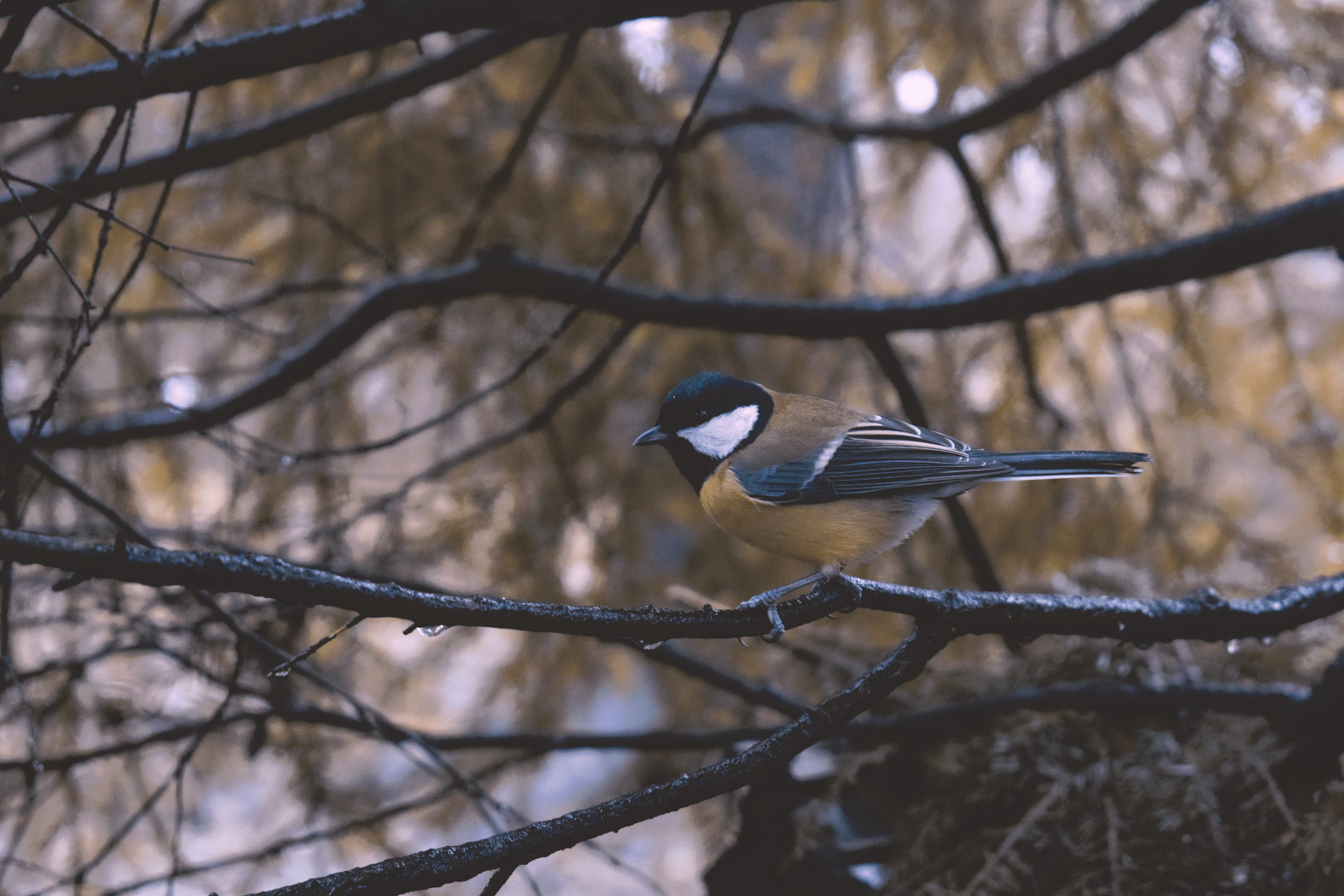 brown, white, and black bird perch on tree branch