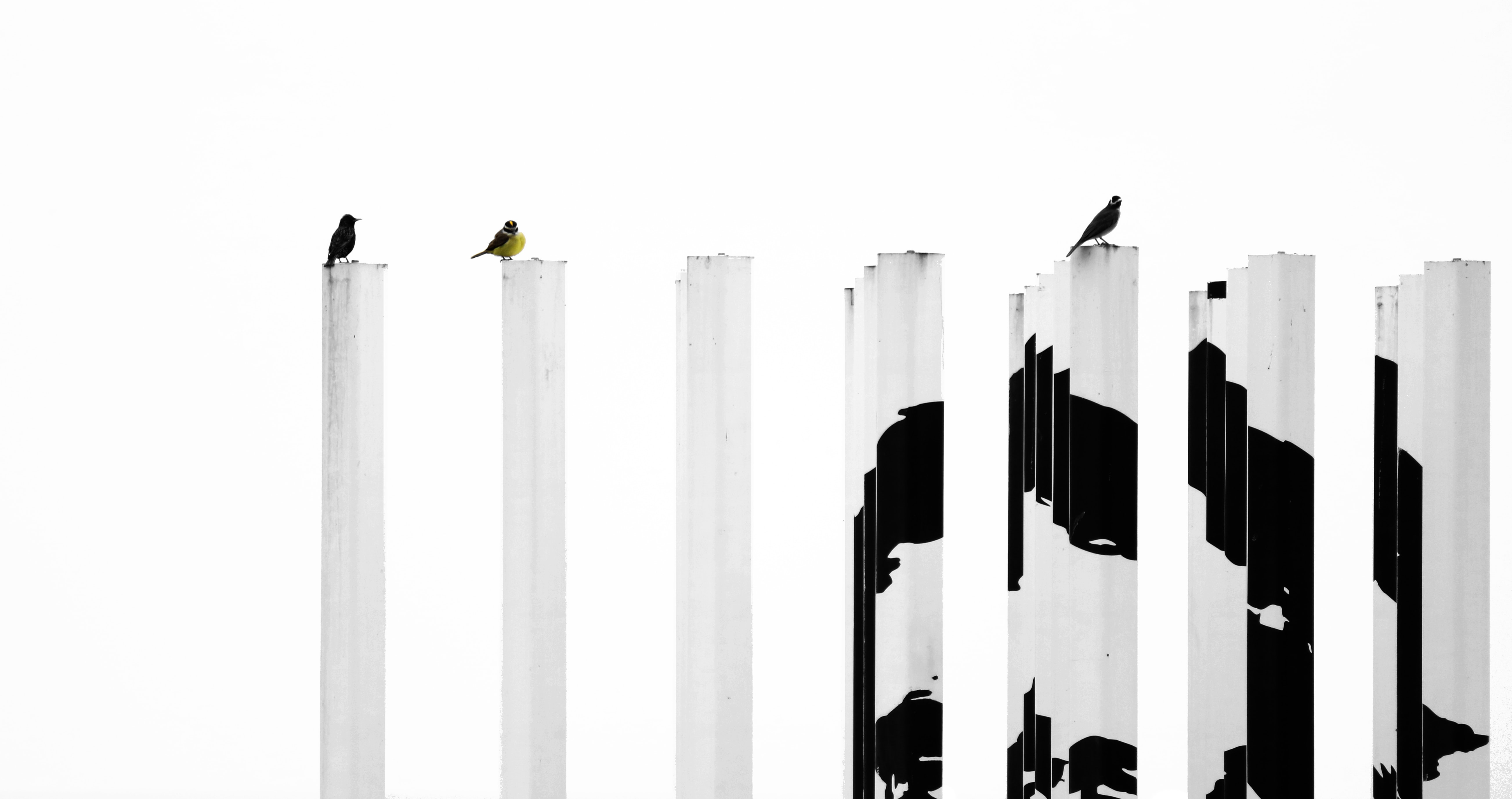 blacka nd white painted posts with three birds perching
