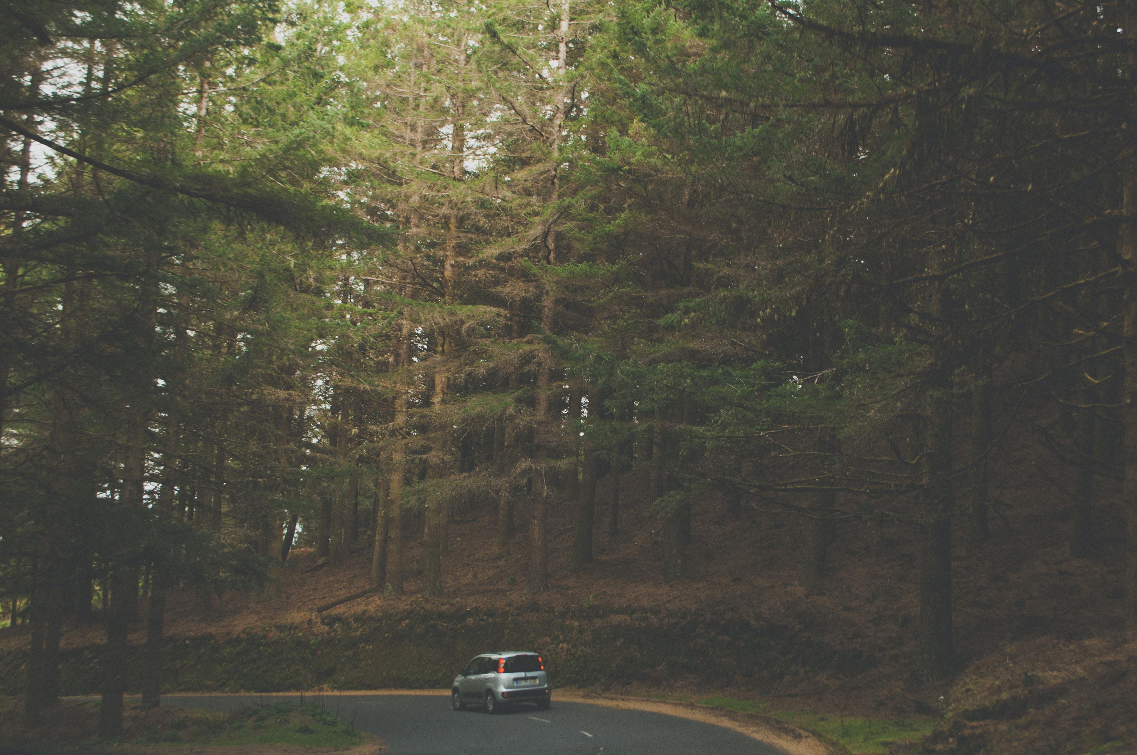 gray car near green trees at daytime