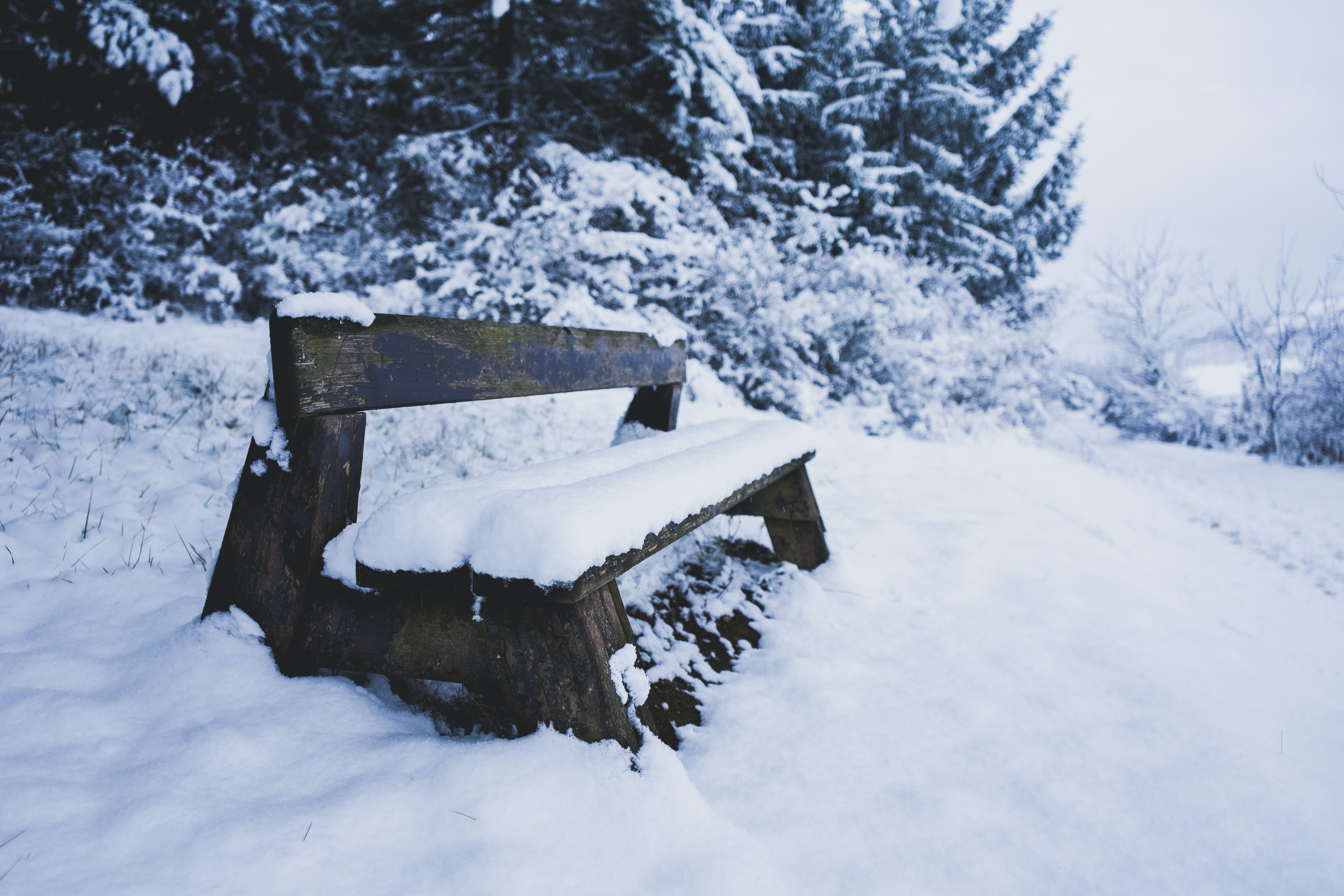 brown wooden bench on snow field beside trees at daytime
