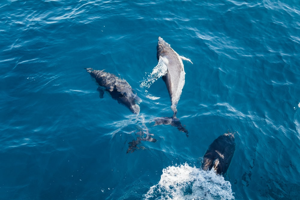 three dolphins on body of water during daytime
