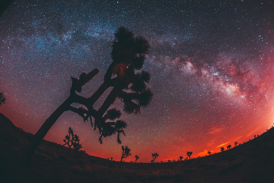 Arrived in Joshua Tree at the perfect timing for this shot. Featured on CanonUSA Instagram.
