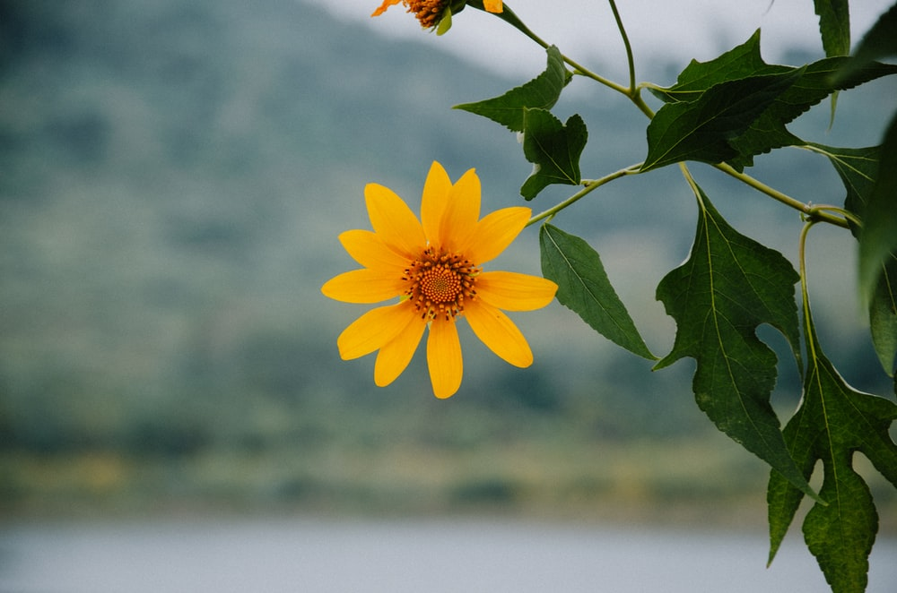 selective focus photography of yellow petaled flower