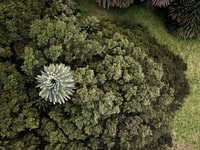 aerial view of green trees