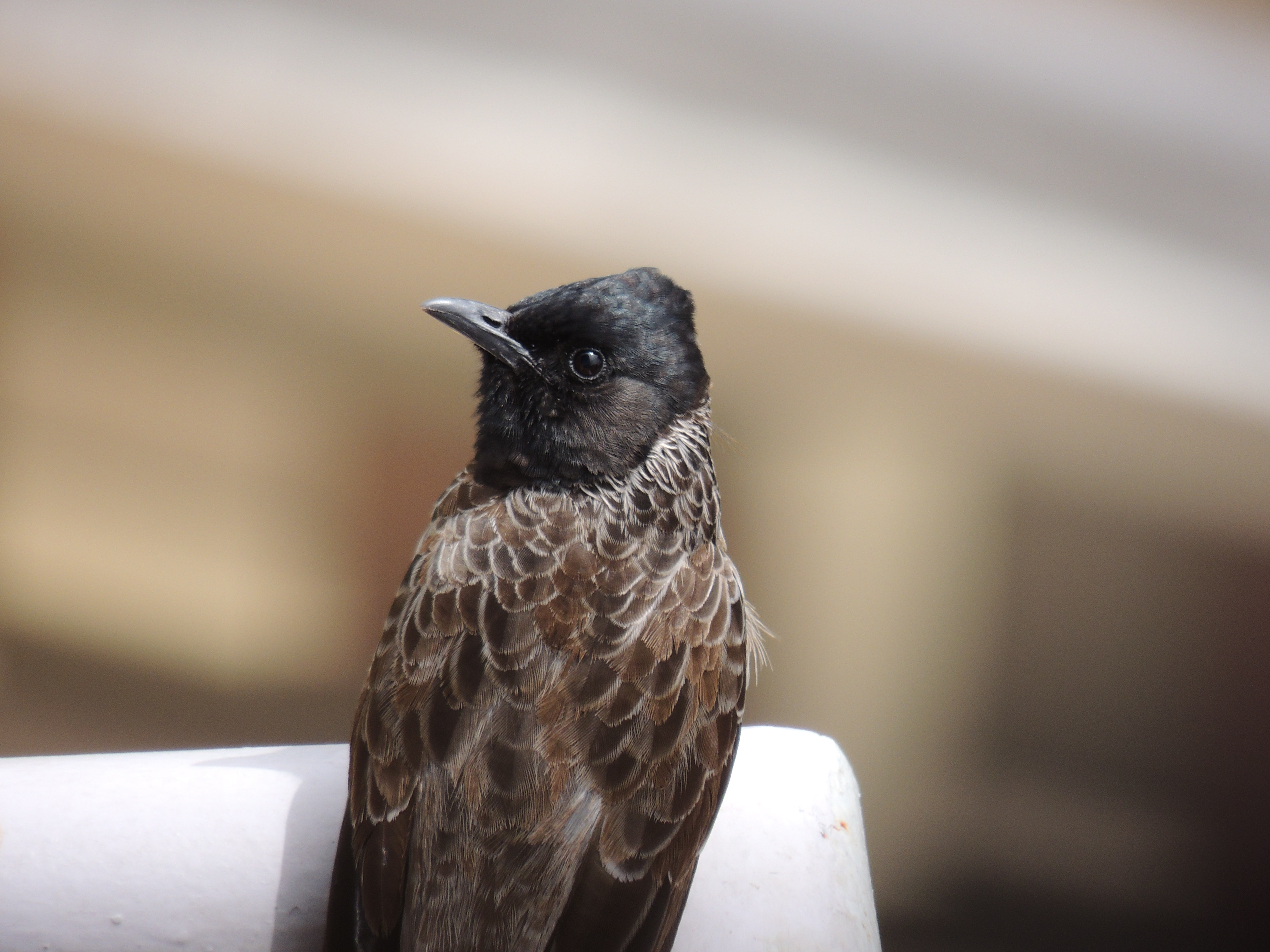 shallow focus of brown and black bird during daytime