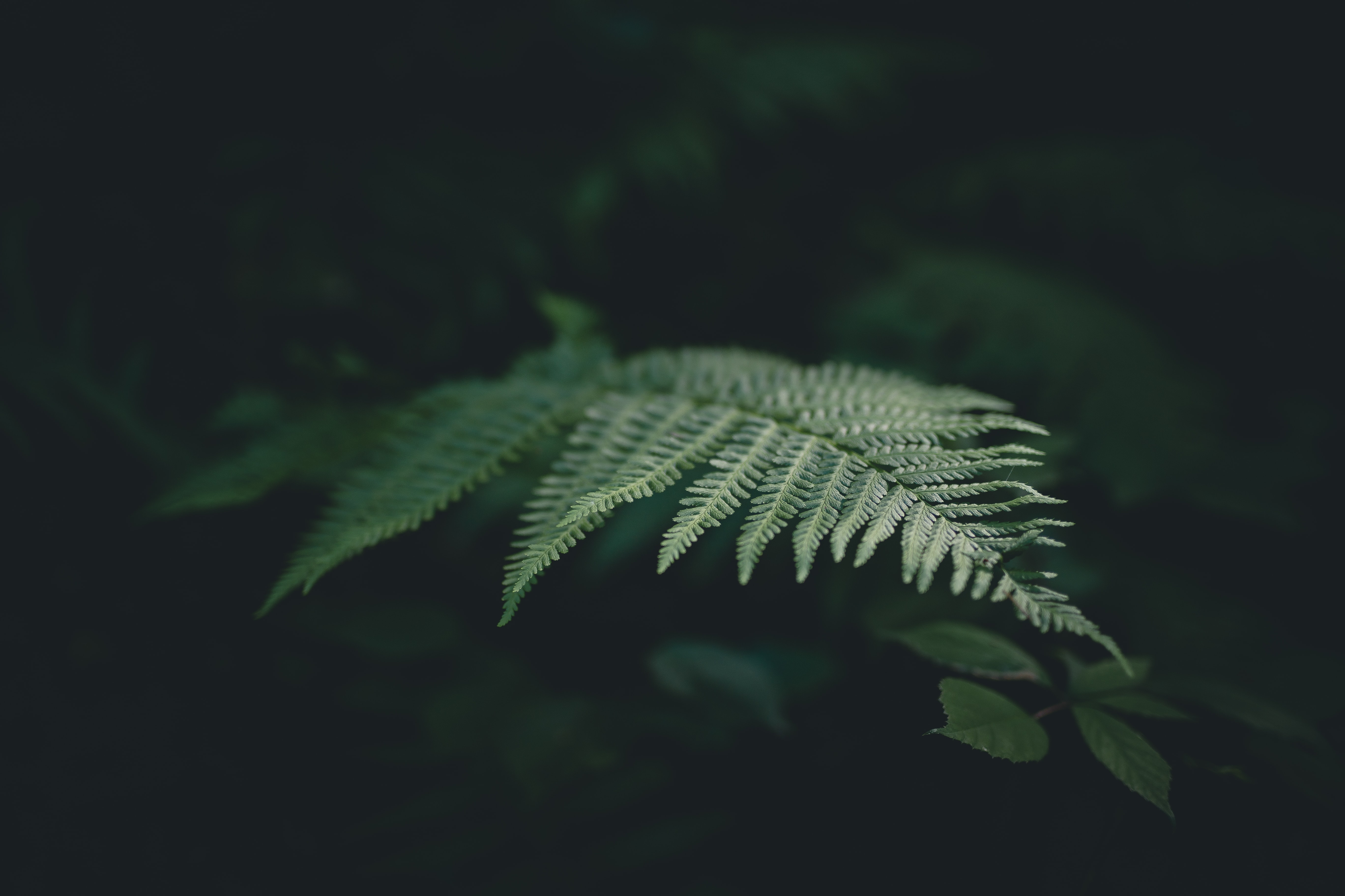 selective focus photograph of fern plant
