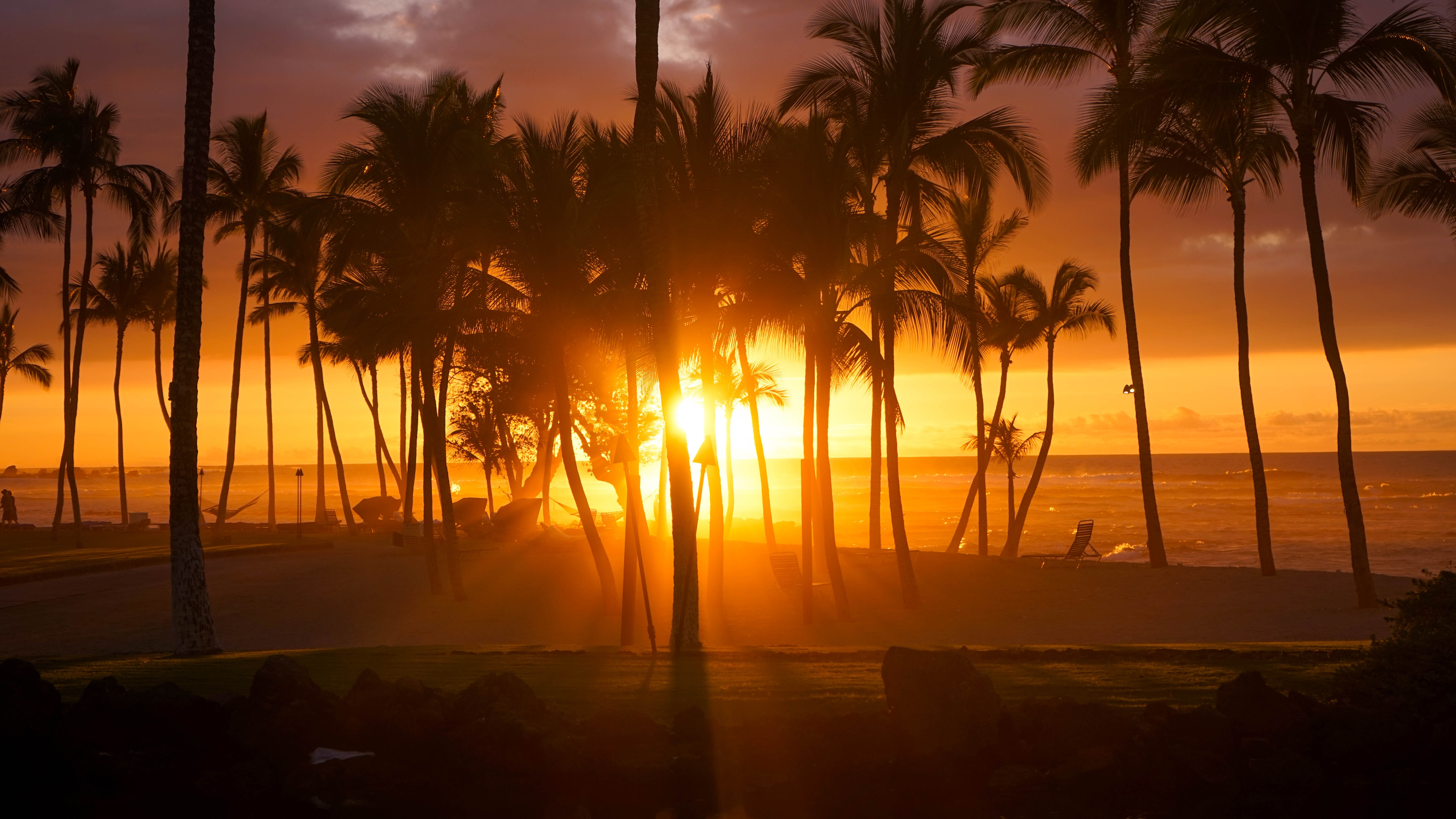 silhouette photo of palm trees during golden hour