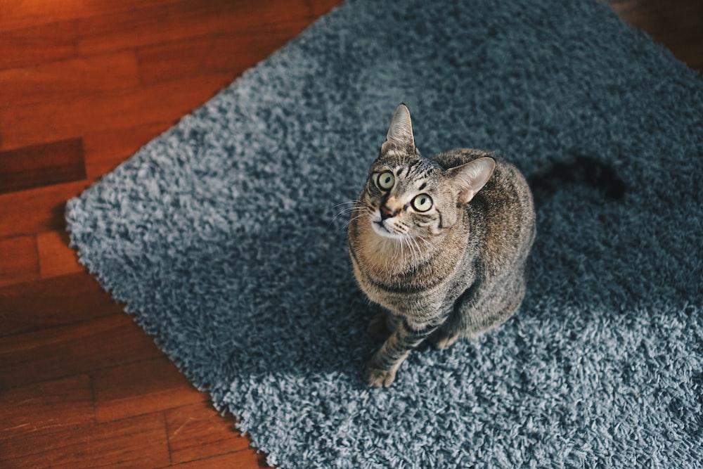 cat looking at top