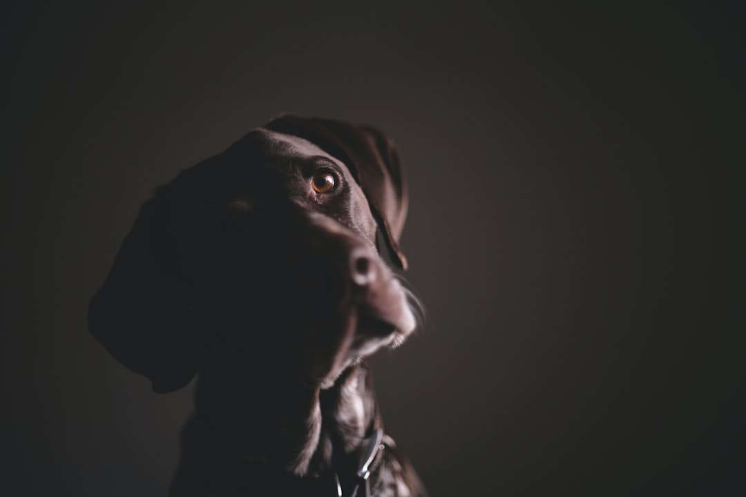 Pointer In The Shadows