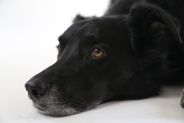 short-coated black dog lying on floor