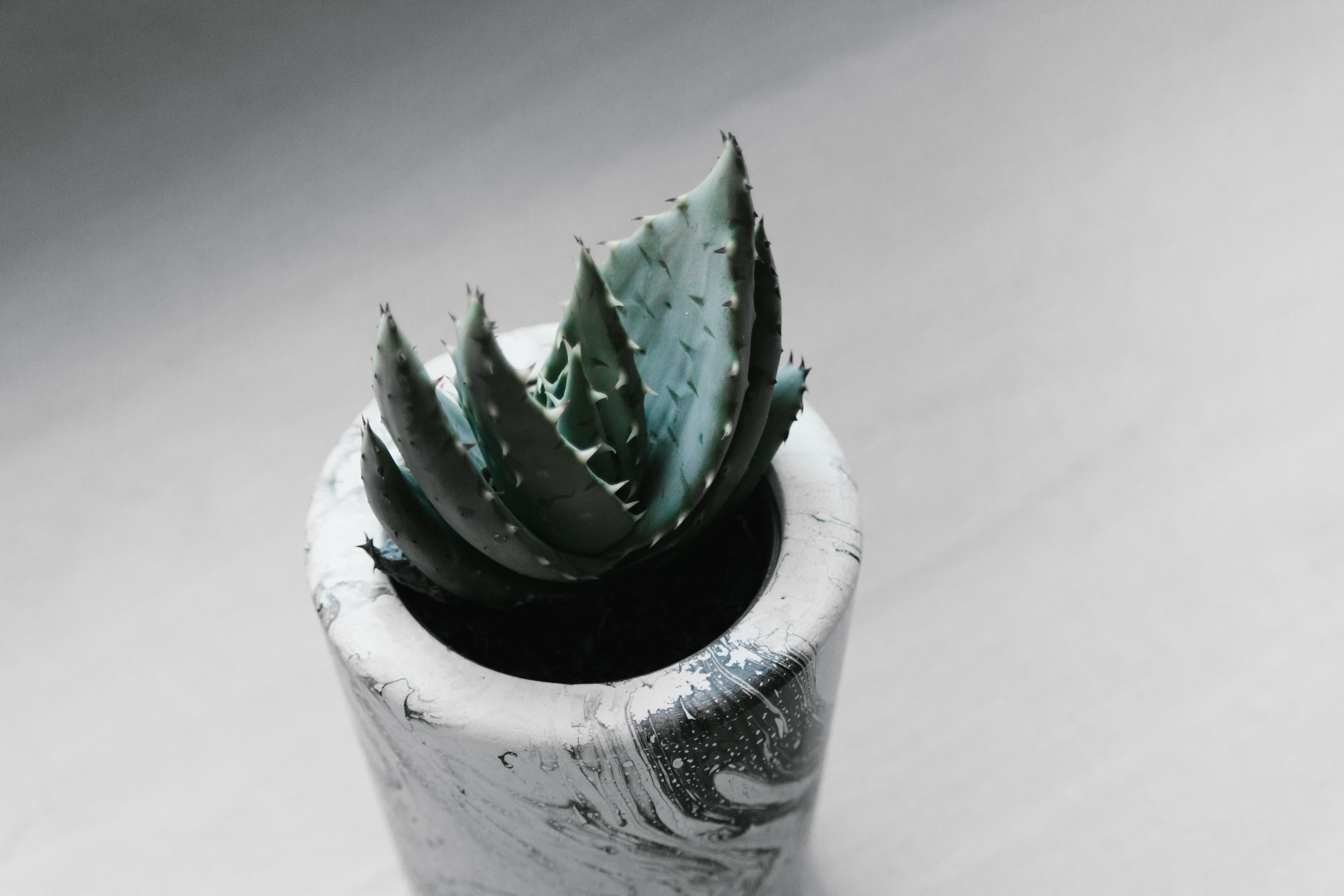 potted green succulent plant