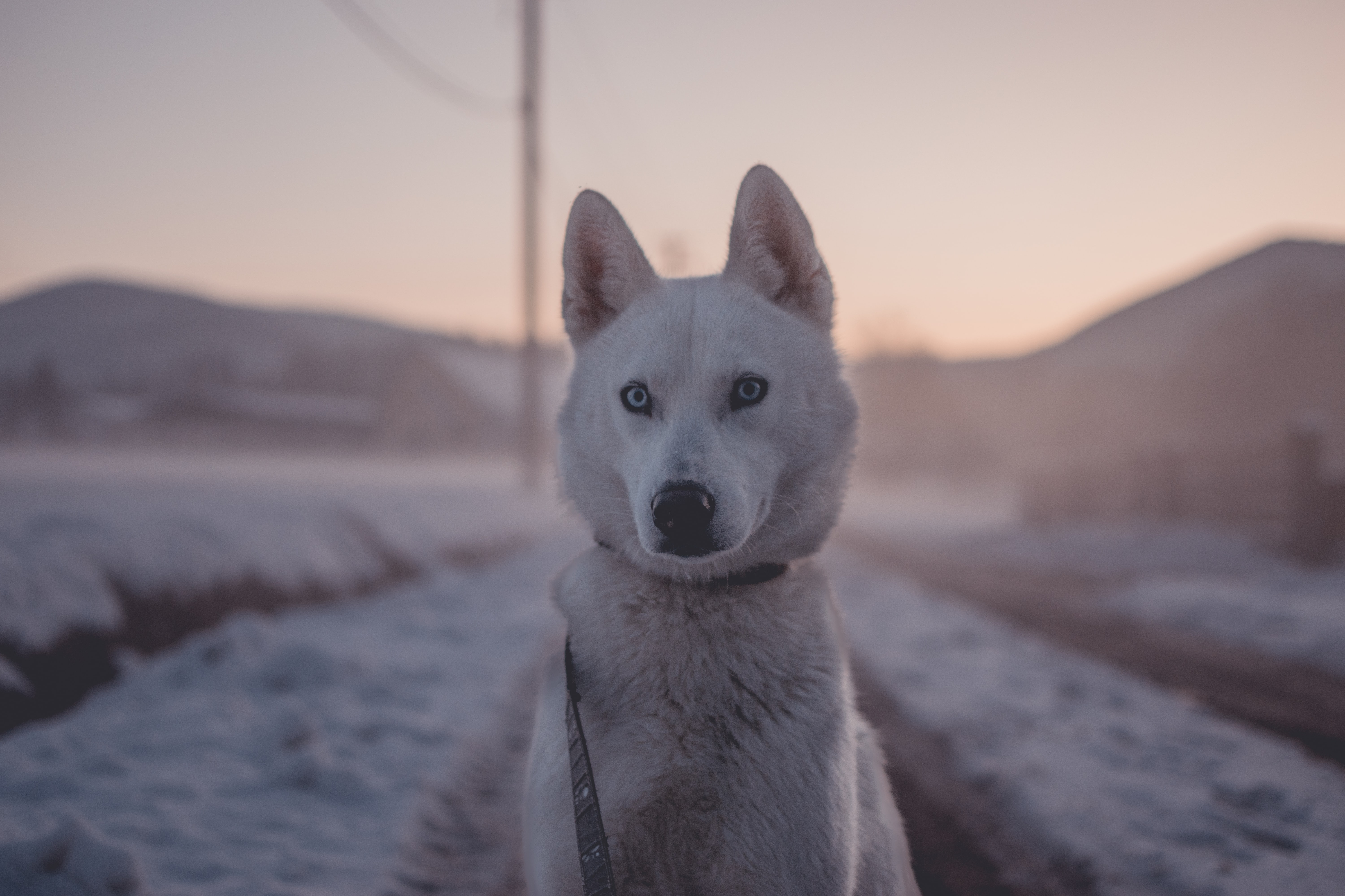The dog who Waited too long dogs stories
