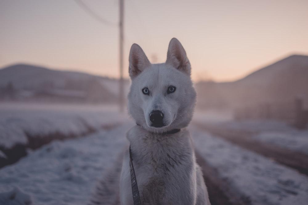 closeup photo of dog