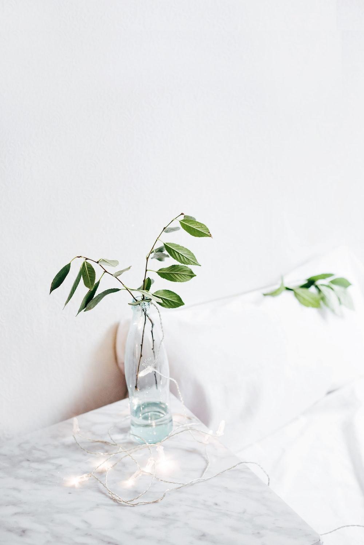 green leafed plant on vase on table
