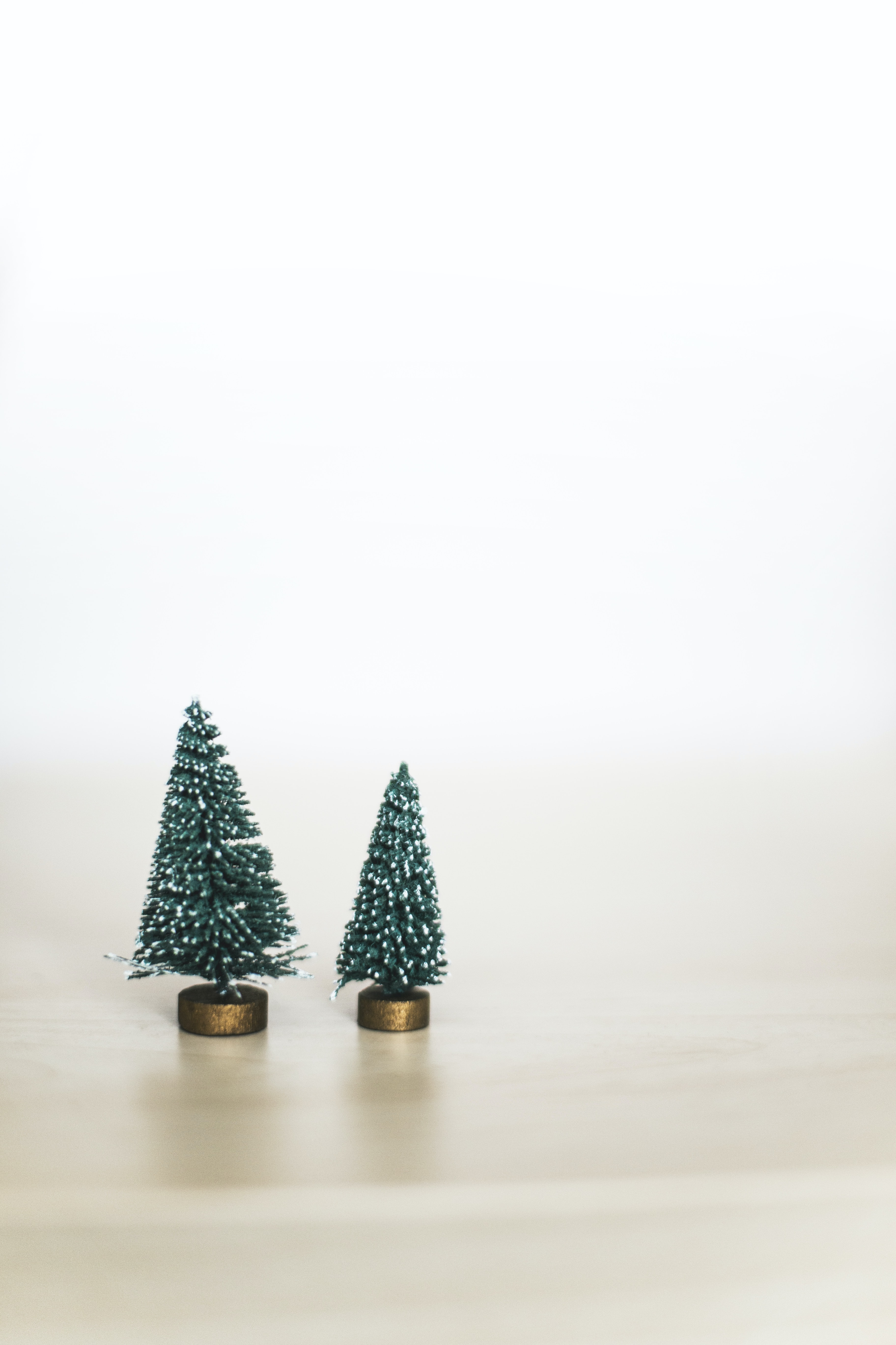 two green pine trees