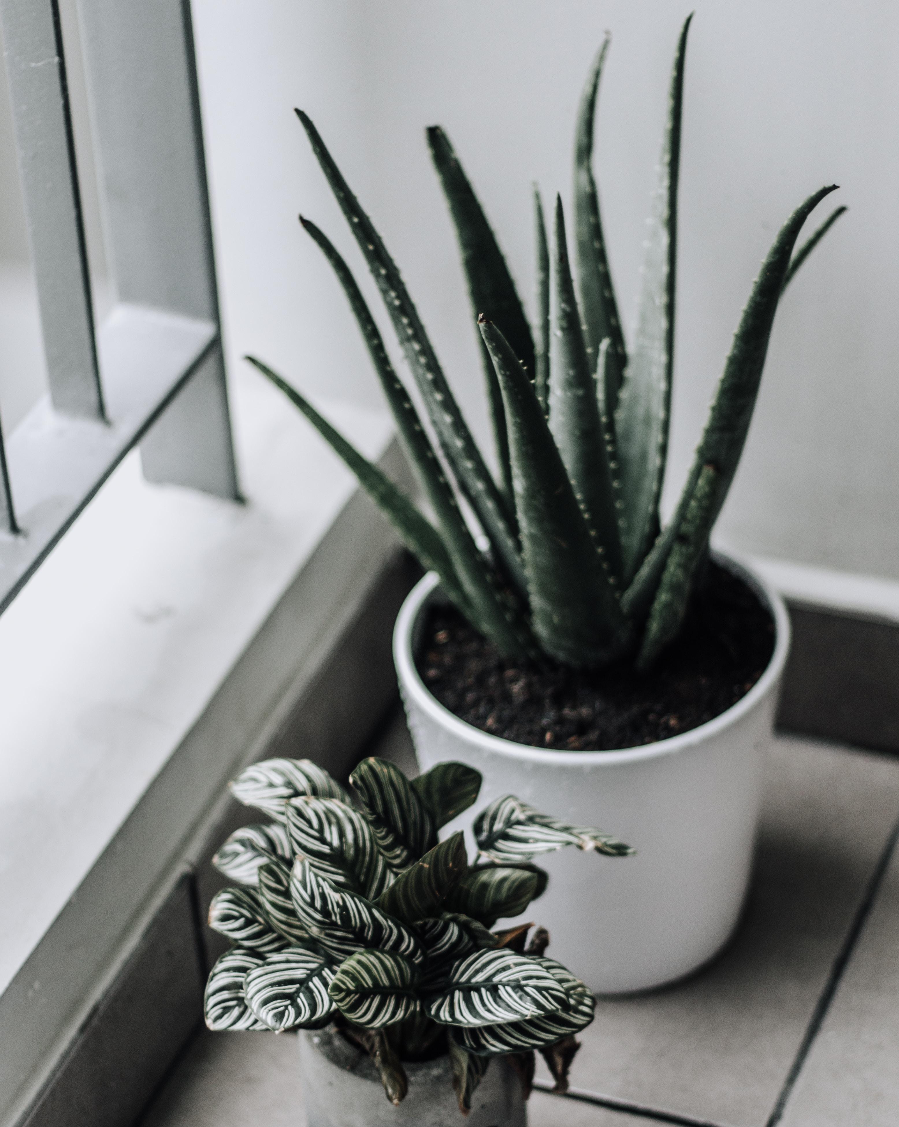 shallow focus photography of aloe vera plant in ceramic pot