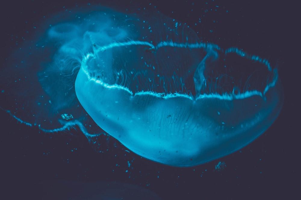 underwater photography of jellyfish