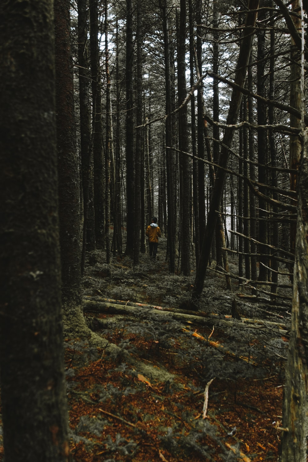 person surrounded by trees