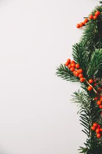Not like Christmas at all christmas-poetry-2020 stories