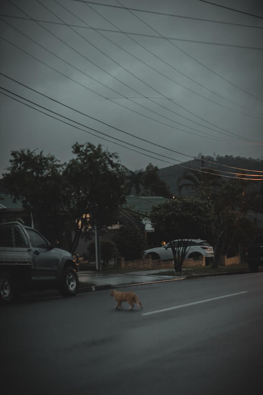 orange cat walking on road
