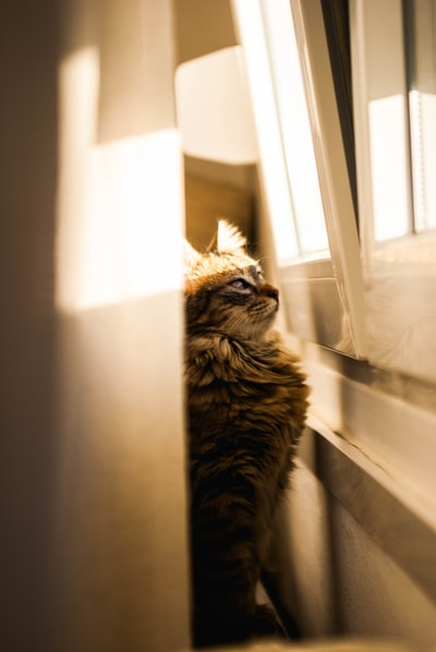 black tabby cat in focus photography