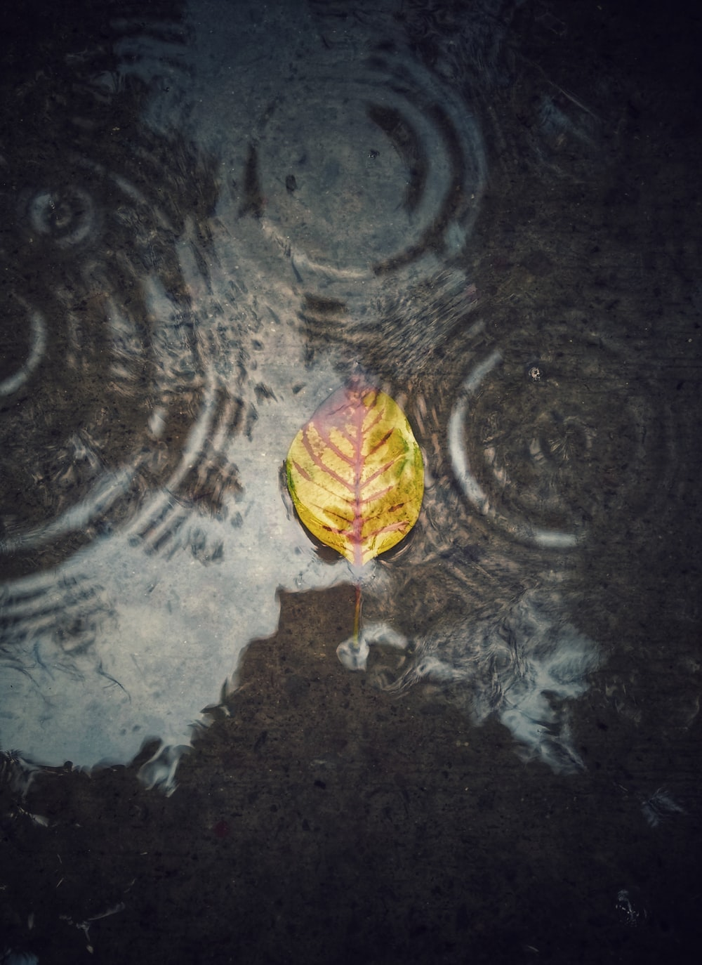 shallow focus photography of dried leaf on body of water