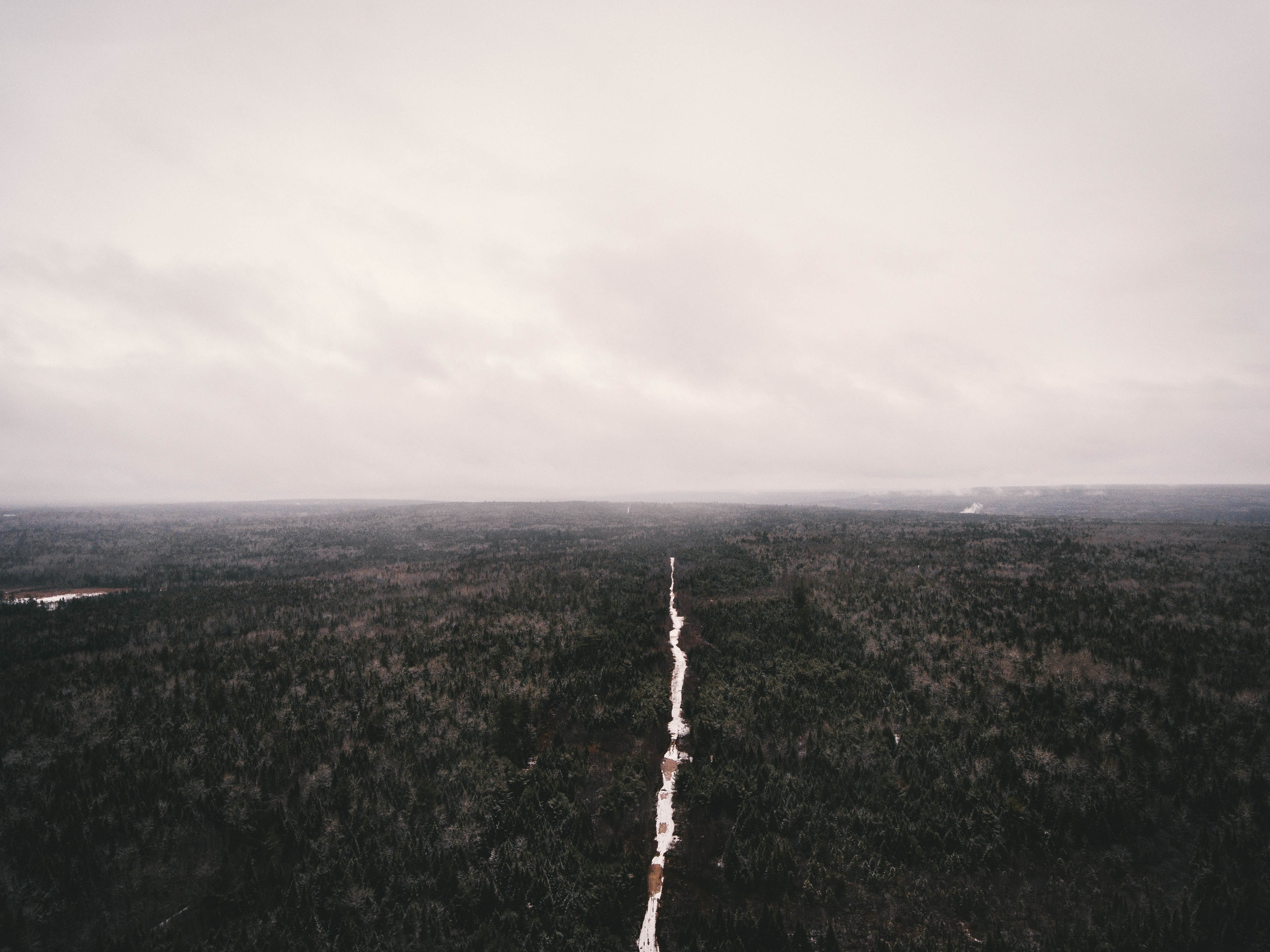 top view photography of trees