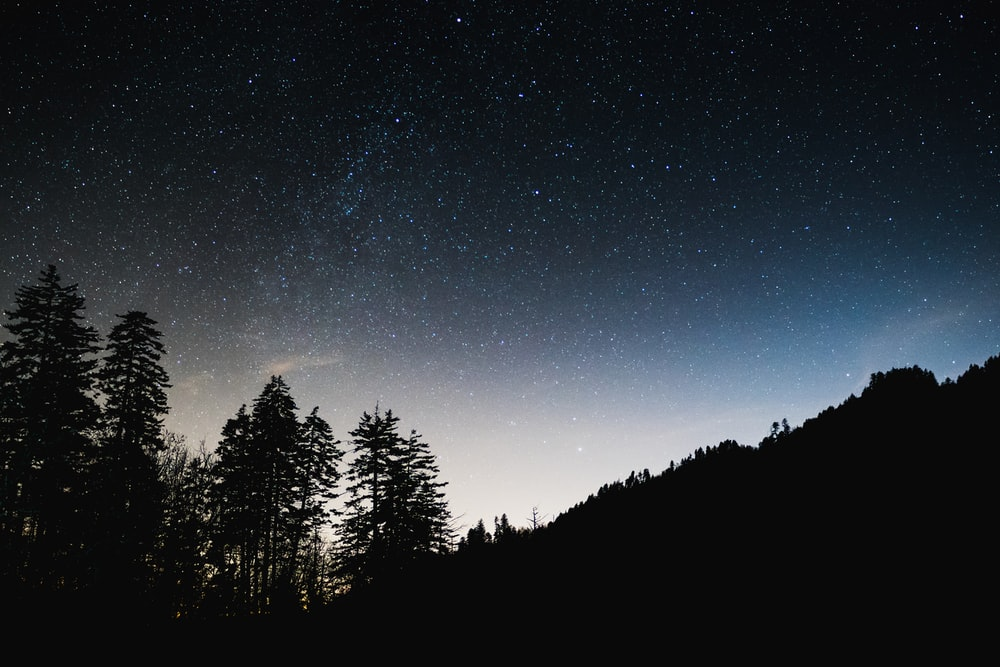 silhouette photography of trees and mountain under starry sky