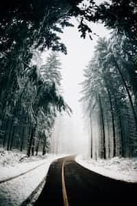 Winter Maze winter stories