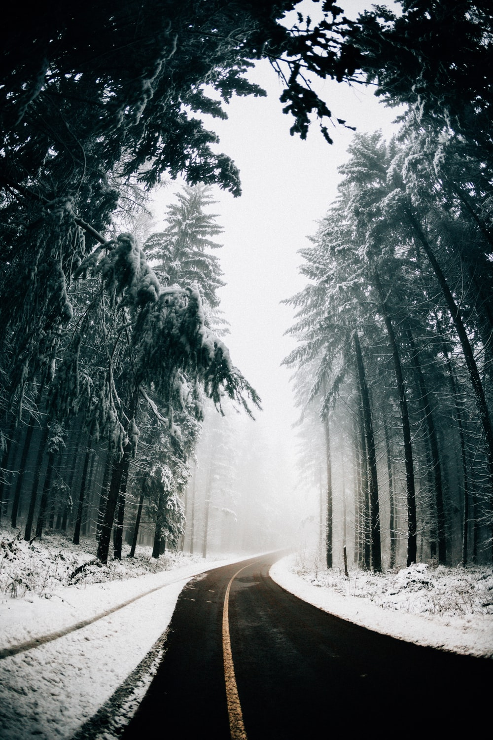 asphalt road in between trees covered with snow