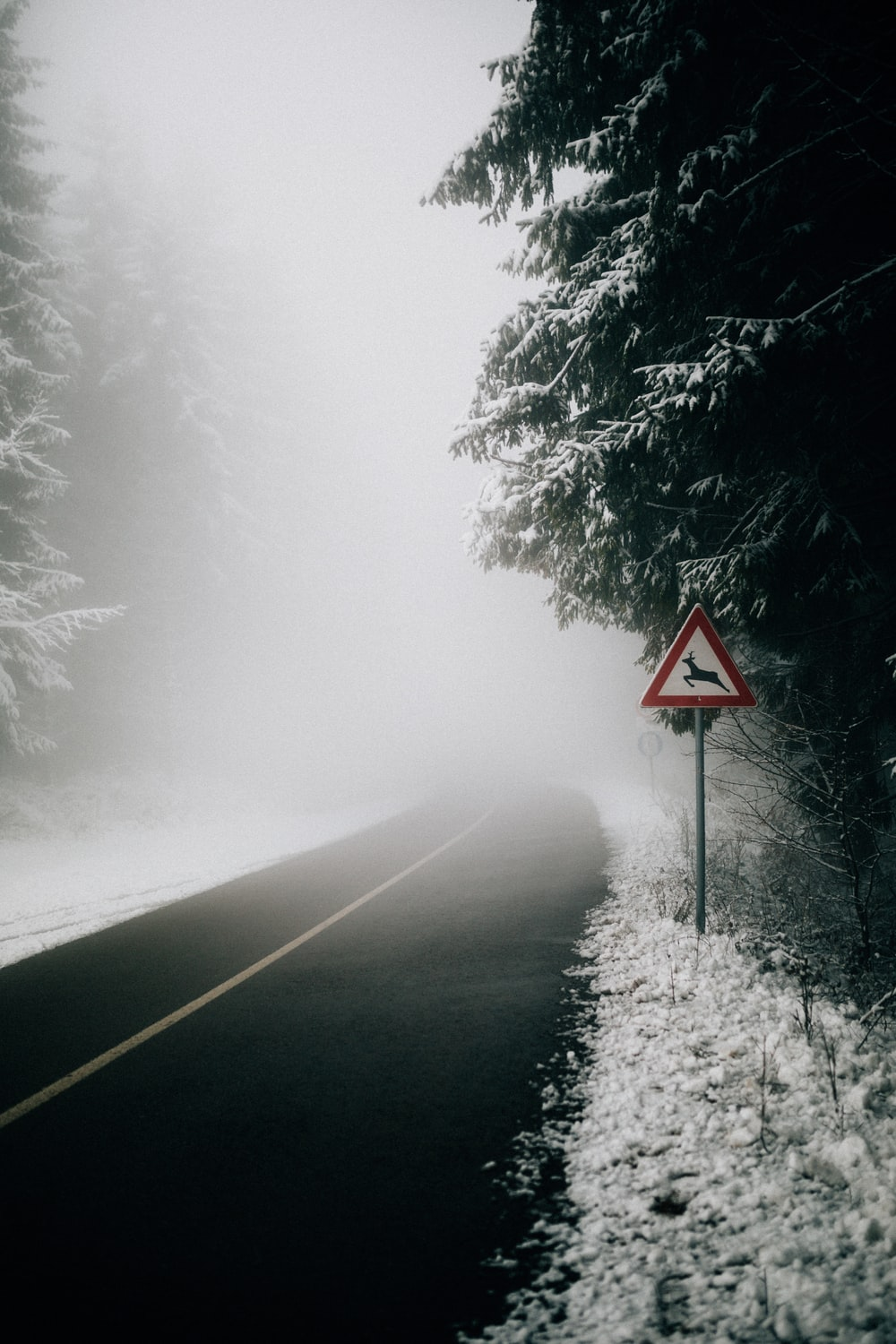 black asphalt road surrounded with trees and covered with white thick fog