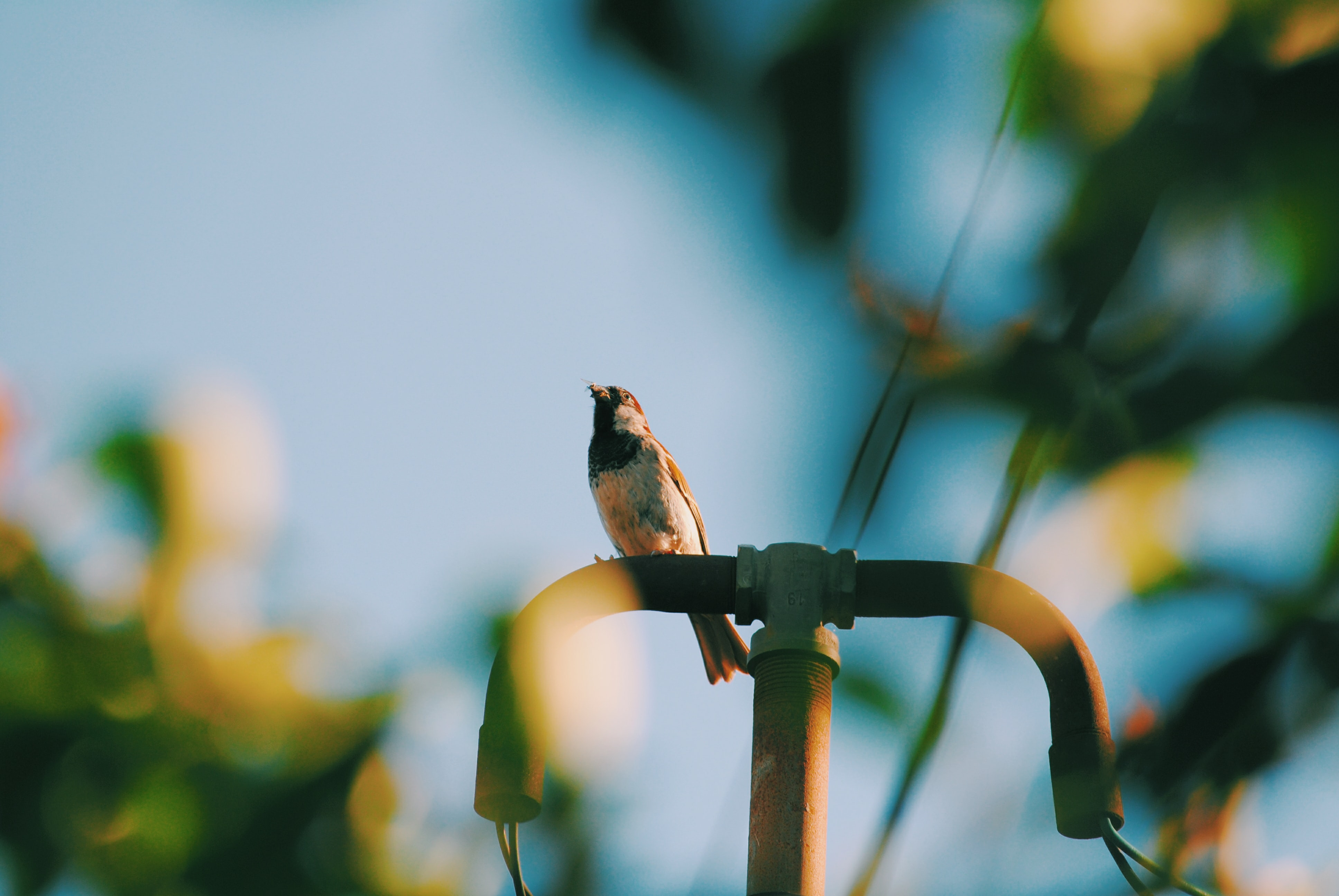 bird perched on street light