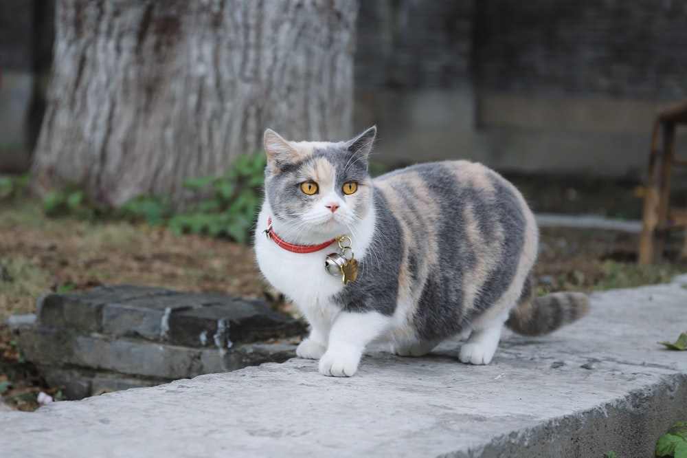cat on concrete wall
